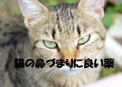 猫の鼻づまりに良い薬