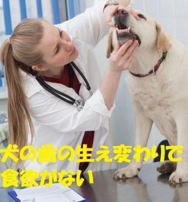 犬の歯の生え変わりで食欲がない