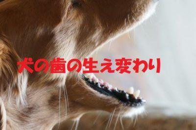 犬の歯の生え変わり