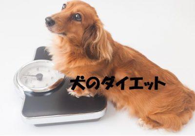 犬のダイエット