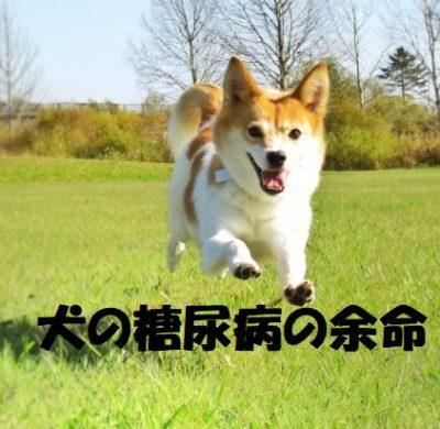 犬の糖尿病の余命