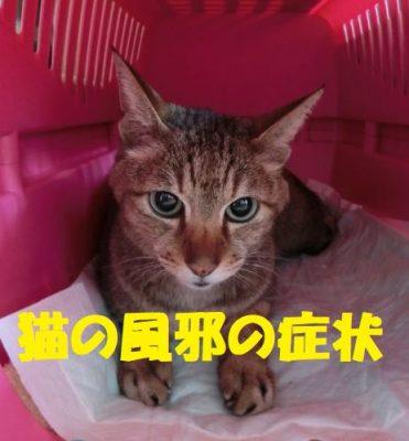 猫の風邪の症状