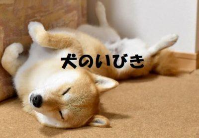 犬のいびき