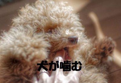 犬が噛む理由