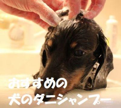 おすすめの犬のダニシャンプー