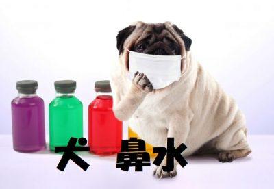 犬の鼻水について
