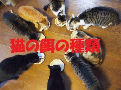 猫の餌の種類