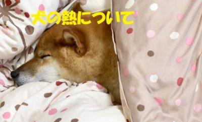 犬の熱について