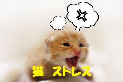 猫のストレス
