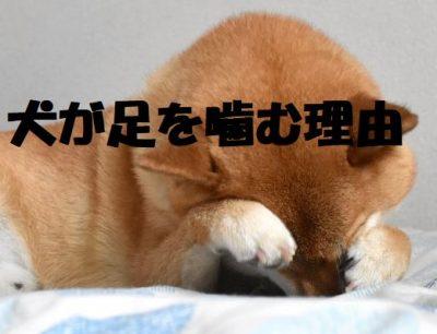 犬が足を噛む理由