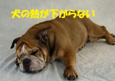 犬の熱が下がらない