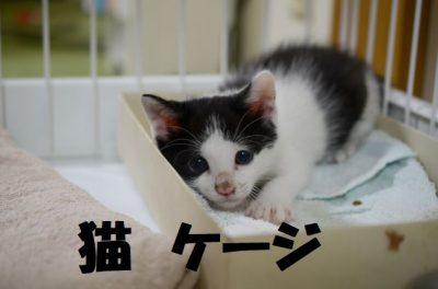 猫におすすめのケージ