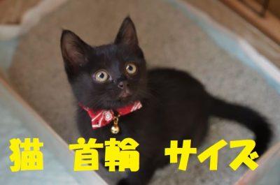 猫の首輪理想のサイズ