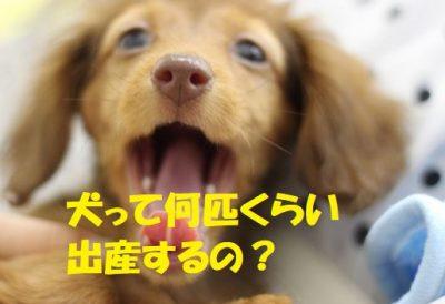 犬って何匹くらい出産するの?