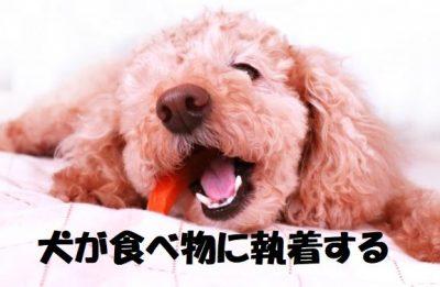 犬が食べ物に執着する
