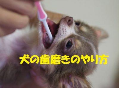 犬の歯磨きのやり方