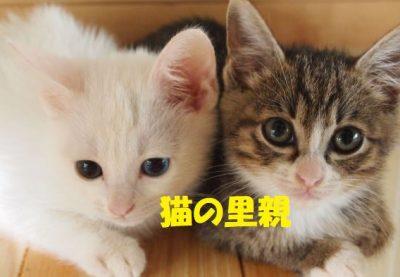 猫の里親になるため