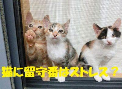 猫に留守番させるとストレスになる