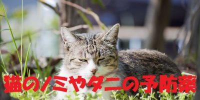 猫のノミやダニの予防薬