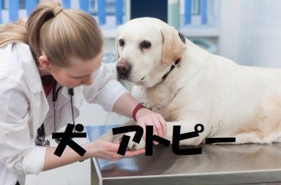 犬のアトピー性皮膚炎