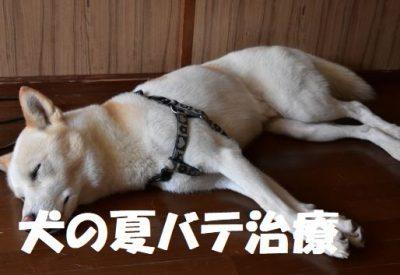 犬の夏バテ治療