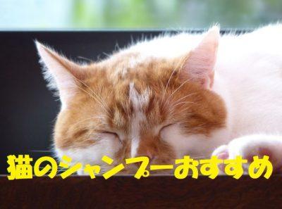 猫のシャンプーのおすすめ