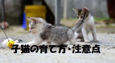 子猫の育て方・注意点