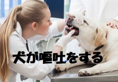 犬が嘔吐をする