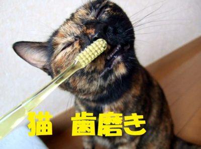 猫の歯磨きのやり方