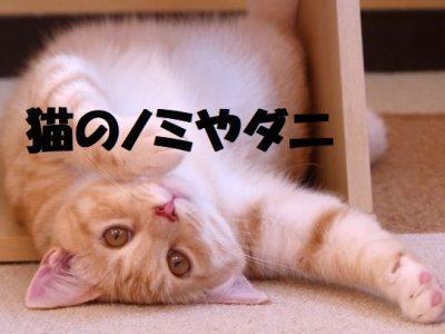 猫のノミやダニ