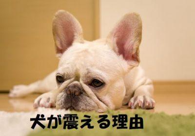 犬が震える理由