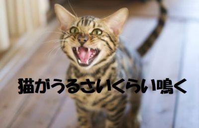 猫がうるさいくらい鳴く