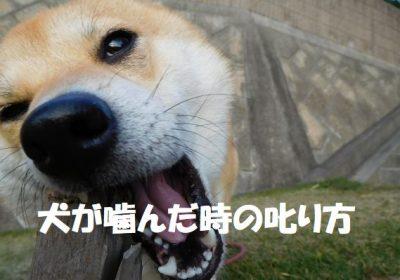 犬が噛んだ時の叱り方