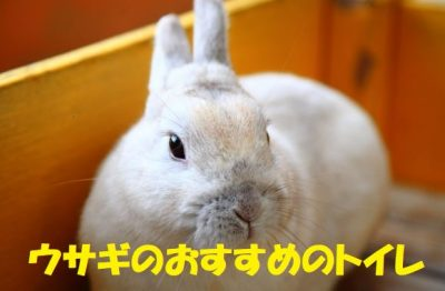 ウサギのおすすめのトイレ