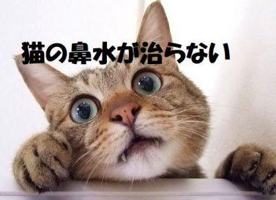 猫の鼻水が治らない
