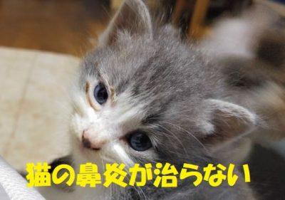 猫の鼻炎が治らない