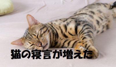 猫の寝言が増えた理由