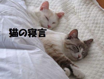 猫が寝言で鳴いたりする