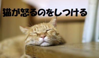 猫が怒るのをしつける