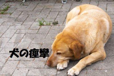 犬の痙攣の原因