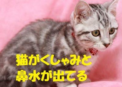 猫がくしゃみと鼻水が出てる
