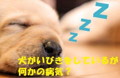 犬がいびきをしているが何かの病気?