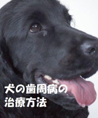 犬の歯周病の治療方法