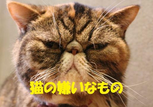 猫 が 嫌い な 匂い 猫が嫌いな匂いとは?ハーブやアロマも猫にとっては悪臭!?
