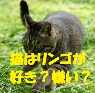 猫はリンゴが好き?嫌い?
