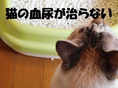 猫の血尿が治らない