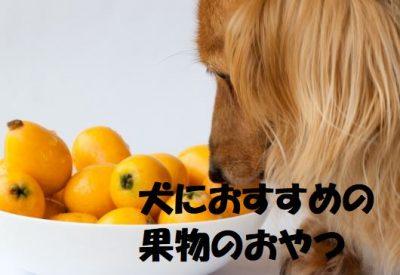 犬におすすめの果物のおやつ