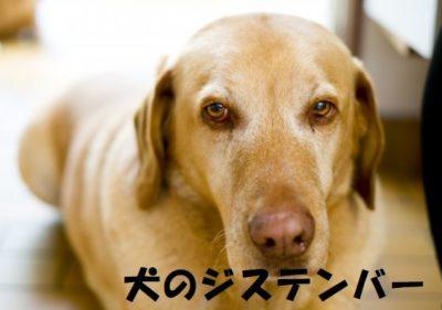 犬のジステンバー