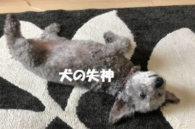 犬の失神について