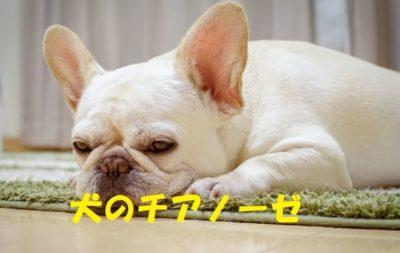 犬のチアノーゼについて